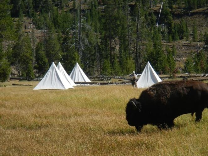 Bison with Tepees
