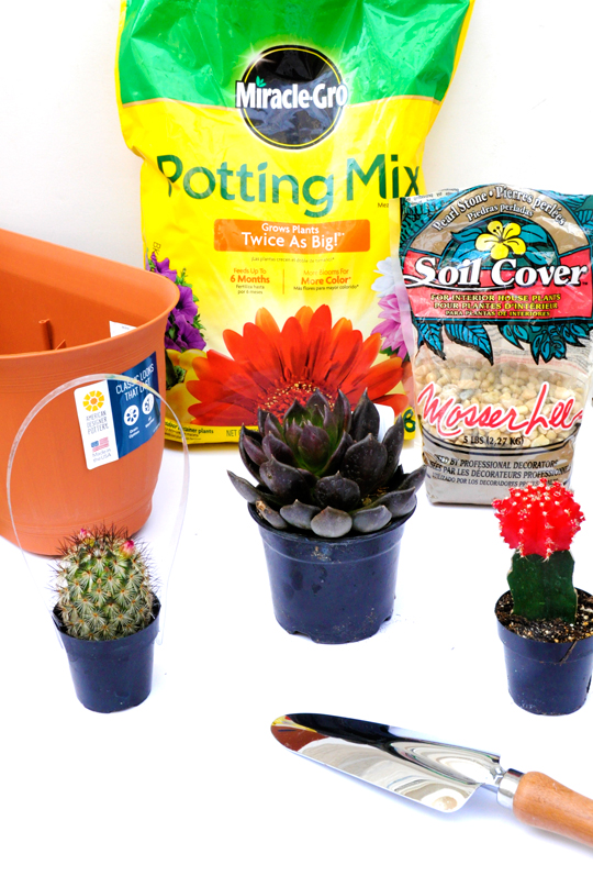 DIY Desert Garden Supplies
