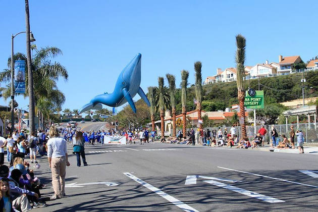 Festival of Whales Parade