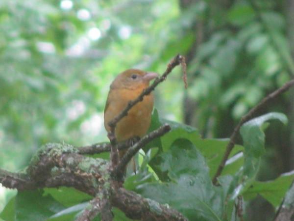 Yellow bird close up
