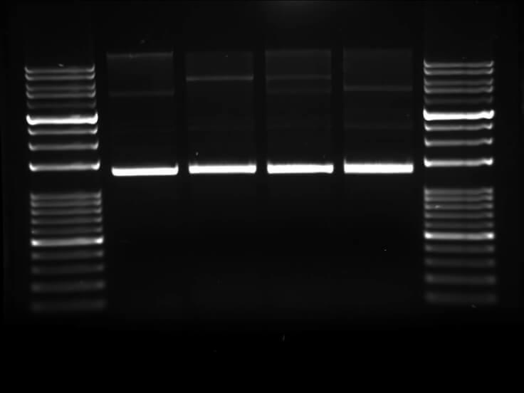 agarose high resolution high gel