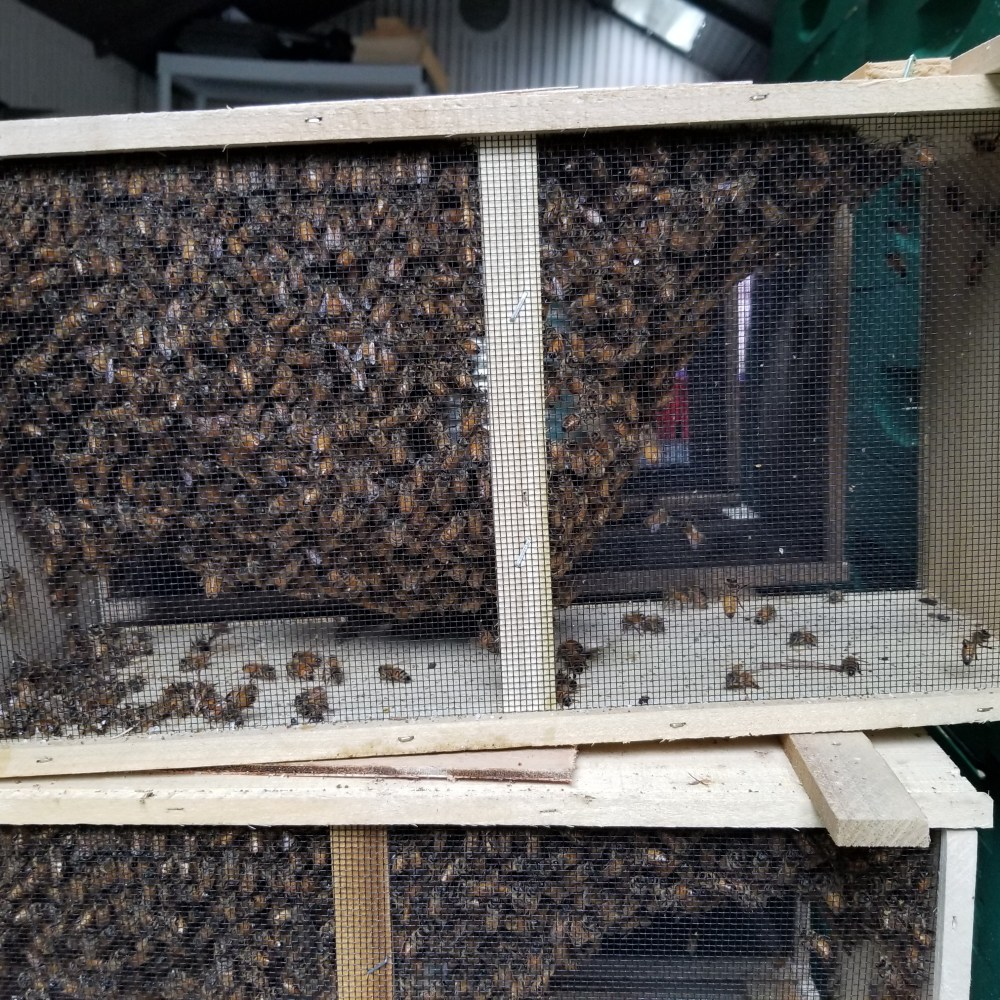2019 Package of Live Honey Bees – 3lbs