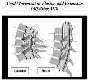 spinalflexion