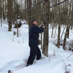 Maple Tree Tapping