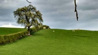mill hill farm