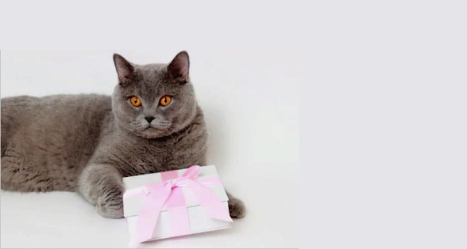 cadouri pisici cover