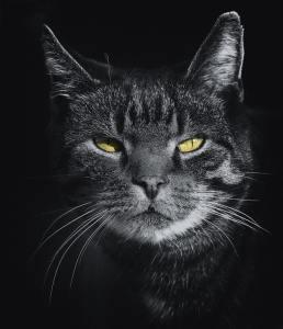 zodiac pisici scorpion