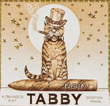 reclama pisica trabuc Tabby