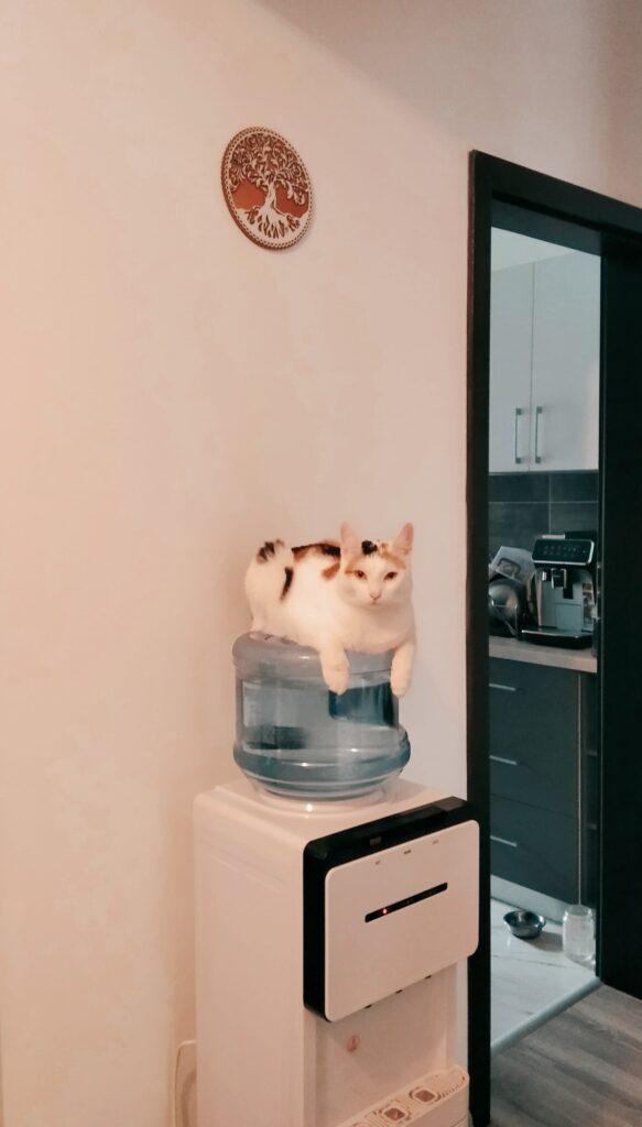 dozator de apa cu pisica pe butoi