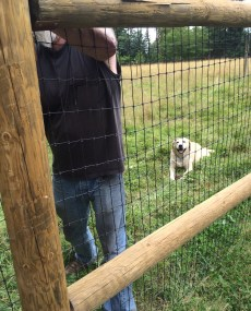 Henry supervised the fence installation.