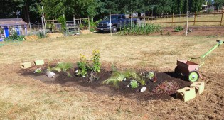 The mixed flower garden in its infancy