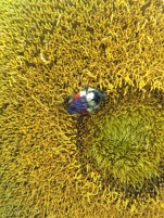Colorful bee on a sunflower