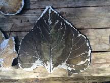 Concrete sunflower leaf