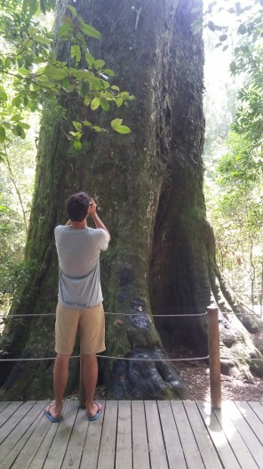 big tree with ryan for context