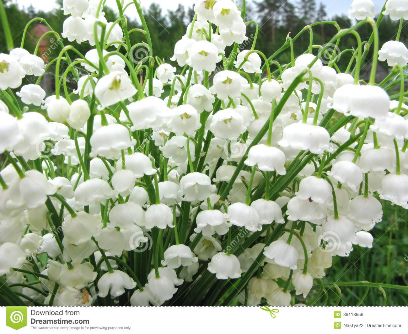Le Meilleur Bouquet Of Lily Of The Valley Flowers Stock Photo Image Ce Mois Ci