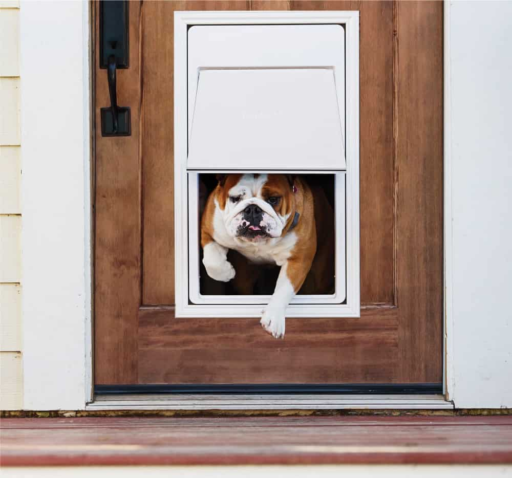Le Meilleur Best Electronic Dog Doors Dec 2018 Buyer S Guide Ce Mois Ci Original 1024 x 768