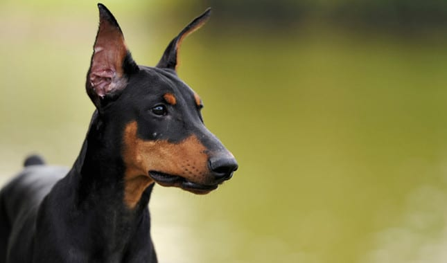 Le Meilleur Meet The Most Loyal Dog Breeds In The World Kiwireport Ce Mois Ci