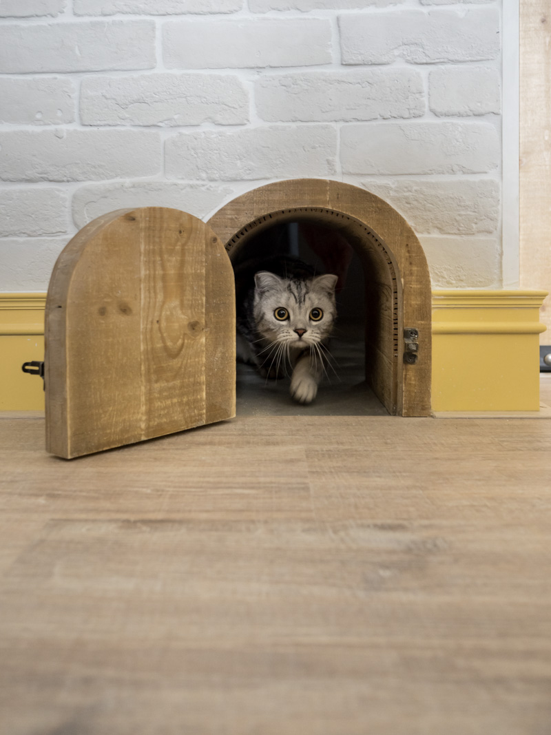 Le Meilleur An Eclectic Loft Designed For Cats And Their Humans Ce Mois Ci