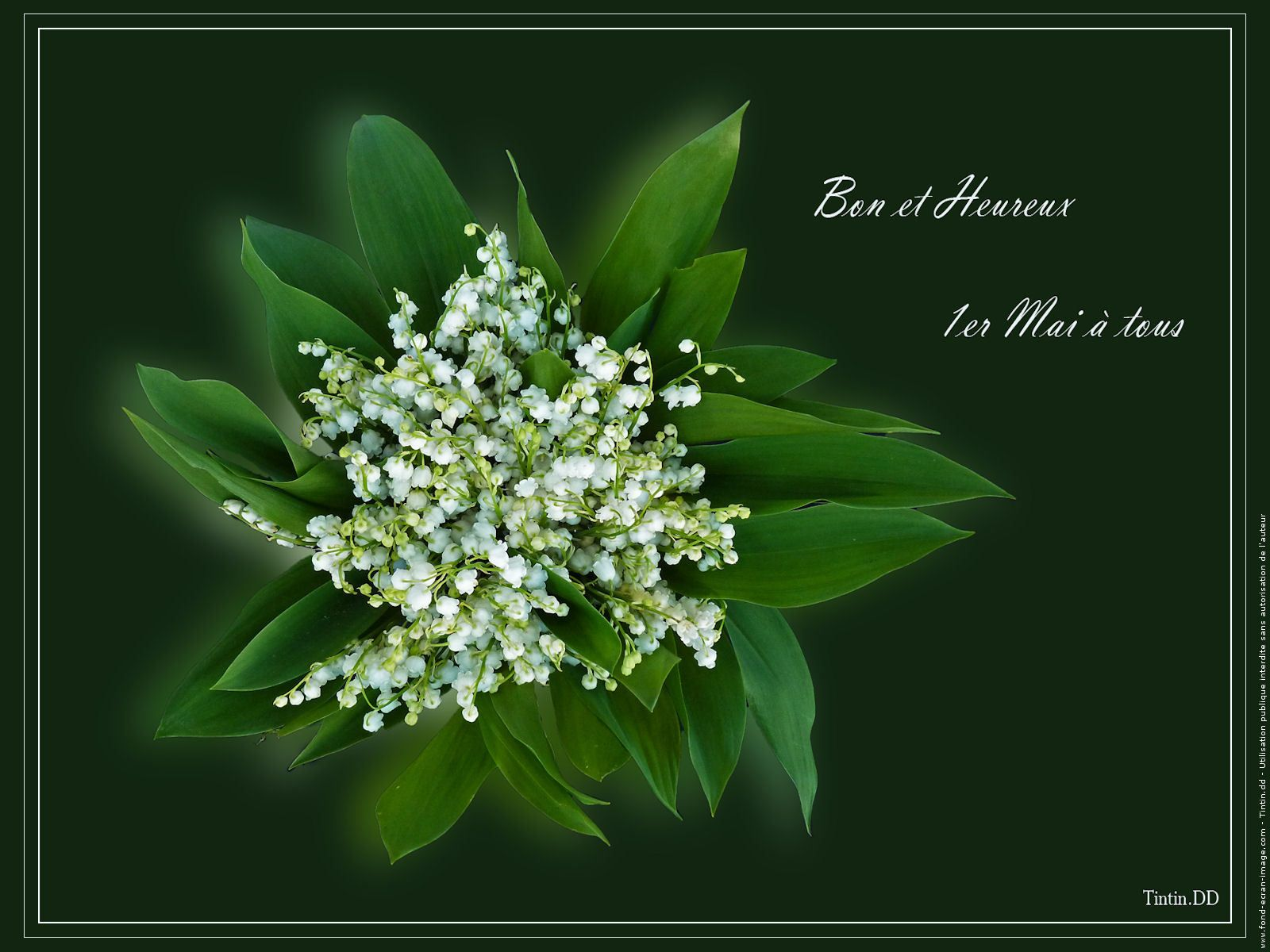 Le Meilleur Pin By Ephemere33 On Le Muguet Lily Of The Valley Ce Mois Ci