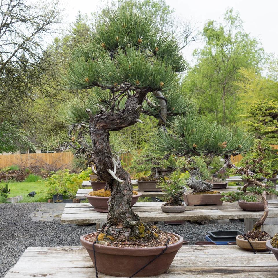 Michael hegedorn tree gallery page colorado rocky
