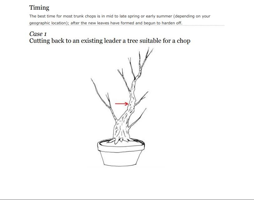Colorado Bonsai For Beginners Trunk Chopping 101 For Deciduous Trees Colorado Rocky Mountain Bonsai Suiseki
