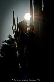 376990_180992811997246_152645858165275_322536_30800302_n Día de la Virgen de Guadalupe
