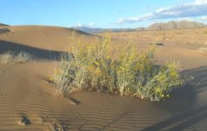 dune walk-pinacate