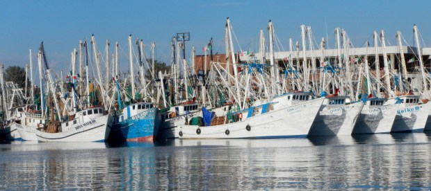 shrimp-fleet- puerto-penasco2