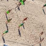 Funkalicius-108 Rocky Point X | Funkalicious beach ball!
