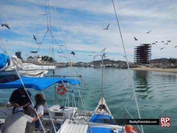 whale-trip-feb2014-1-630x472 Love is in the air! Rocky Point Weekend Rundown!
