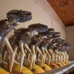shells-dinosaurs Meet the artisans: Jesu and Gabriel