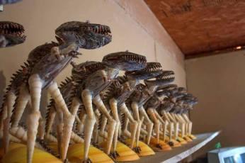 shells-dinosaurs