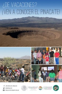 pinacate-ven-a-conocer-630x945 Spring Break, on! Rocky Point Weekend Rundown!