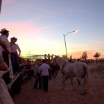equino-terapia-13nov-4 First Equine Therapy Event deemed a success!