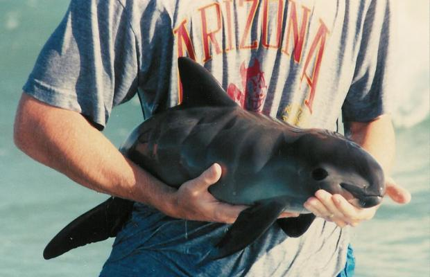 Efforts to save critically endangered vaquita – Rocky ...