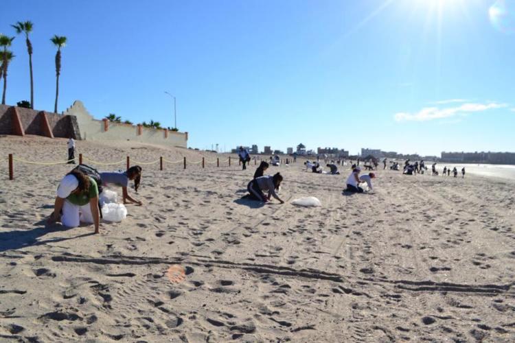 beach-limpia-8 Intense Beach Clean-up Campaigns from Puerto Lobos to Puerto Peñasco