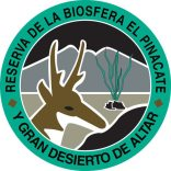 """pinacate-logo August """"a gusto"""".  Rocky Point Weekend Rundown!"""