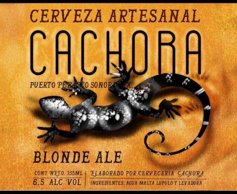 cachora-cerveza-2 Cachora - Una cerveza artesanal hecha 100 % en Puerto Peñasco