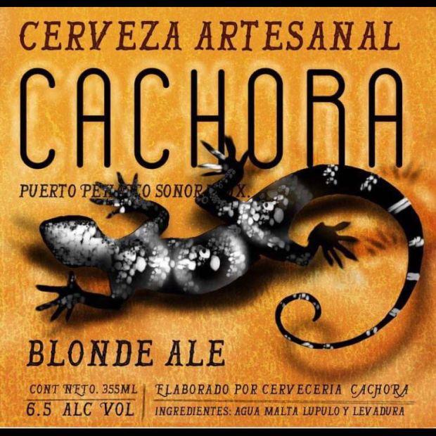 cachora-cerveza-2 Cachora - Craft Beer hecho en Peñasco!