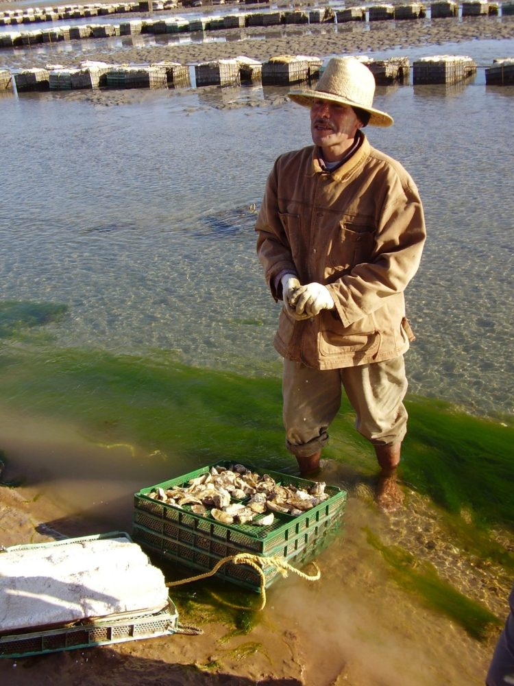 CEDO-Oyster-Experience CEDO Oyster Experience