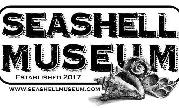 seashell-museum-2019 What Novem-brrr ? Rocky Point Weekend Rundown!