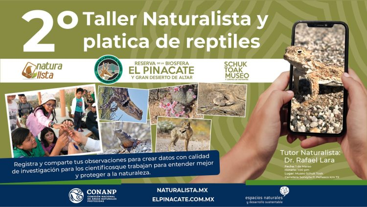 2º-Taller-Naturalista-platica-de-reptiles-Museo-Schuk-Toak-20-1200x676 Welcome, March! Rocky Point Weekend Rundown!