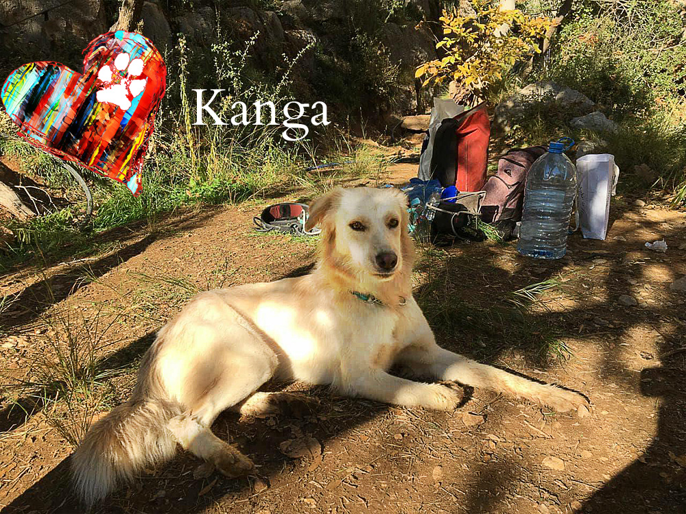 kanga rocky road rescue. Black Bedroom Furniture Sets. Home Design Ideas