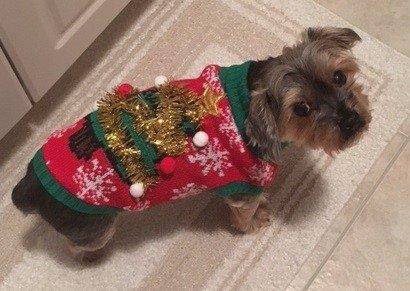 Rocky Christmas