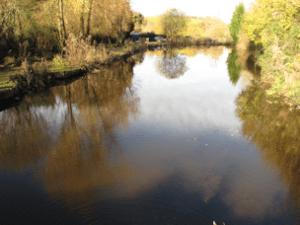 south devon fishing lake with carp