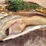 仙台地物屋の牡蠣