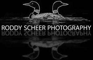 Roddy Scheer Photography