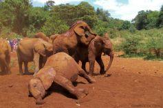 David Sheldrick Wildlife Project (15)