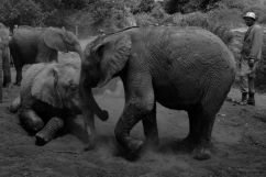 David Sheldrick Wildlife Project (18)