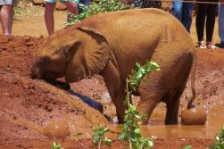 David Sheldrick Wildlife Project (24)